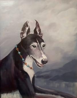 Nellie _ Greyhound