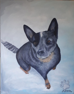 Riley - Australian Cattle Dog