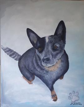 Riley - Australian Cattle Dog