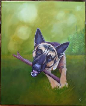 Kujo - German Shepherd