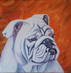 English Bulldog, Smooch.