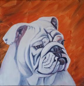 English Bulldog, Smooch.