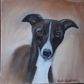 Italian Greyhound - Gambler.jpg