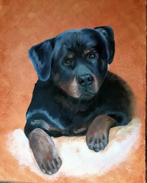 Breia_Rottie pup