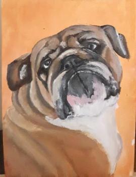 Reggie_English Bulldog
