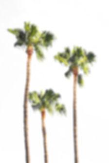 palm-2560139_1920.jpg