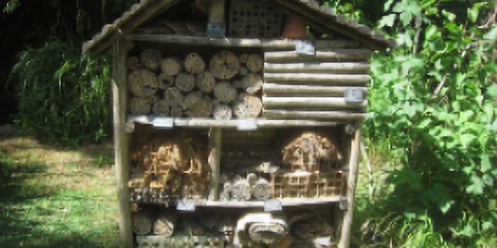 Balade Nature & Biodiversité - Sortie famille