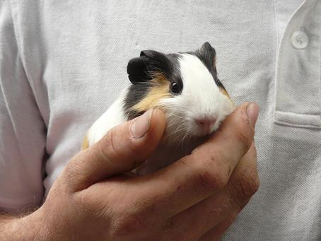 La zoothérapie - médiation animale en milieu carcéral