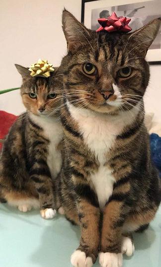 Jen's-Cats-2.jpg