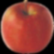 apple-fuji.png