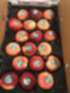 Panta Pak Donut 2.jpg