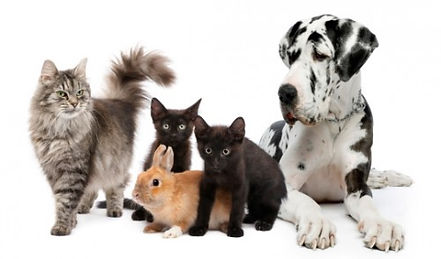 Iniziativa #HearthForAnimals - A difesa degli animali