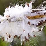 Composta dal90% in Fibra di cellulosa e dal10% da elastane. La seta vegetale viene lavorata in un processo ecosostenibile e poi viene estrusa nel filatoio in forma di filo. Il prodotto si presenta simile alla seta sia come lucentezza che sofficità.