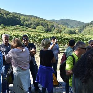 Weinwanderung 2019