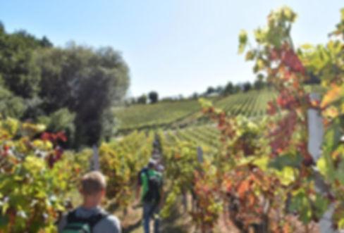 Weinwanderung 2019.jpg