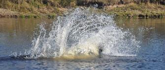 splash hailey.jpg