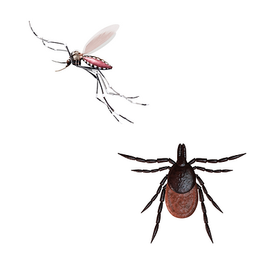 DPS-mosquitoes-and-ticks-website-image.p