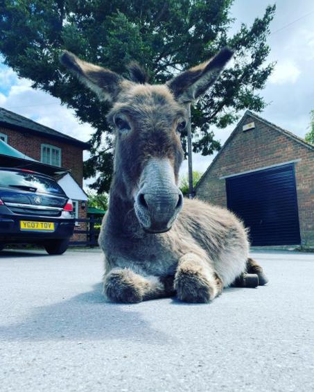 donkey.bmp