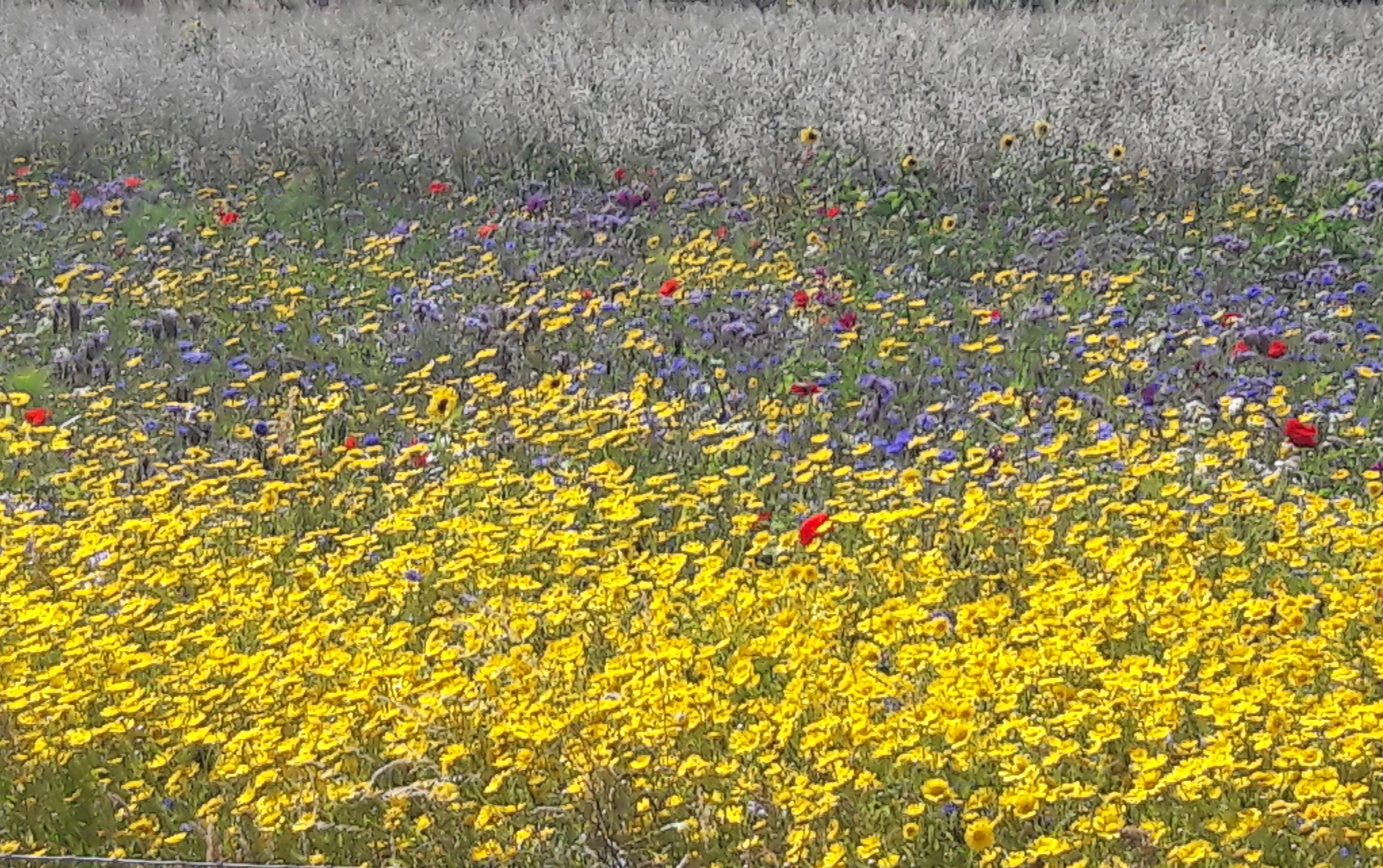 foto bloemenweide