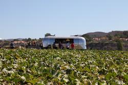 Susie's Farm