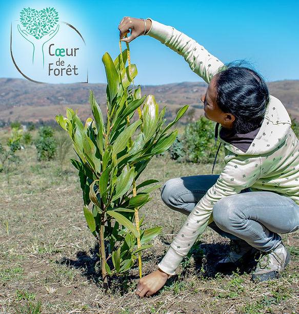 Partenariat association coeur de forêt
