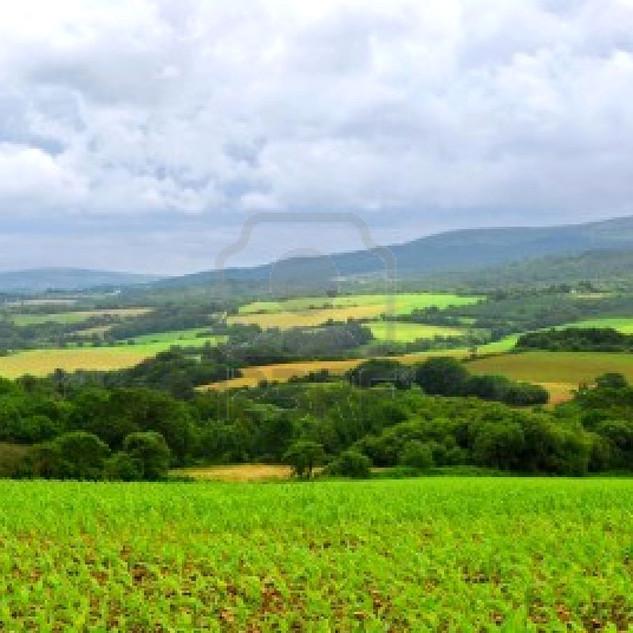 paysage-agricole2.jpg