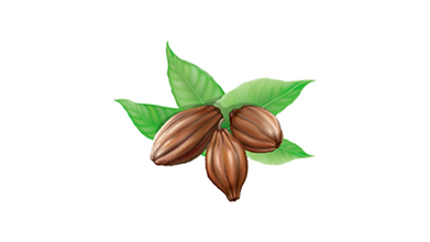 Cocoa clip art - large.png