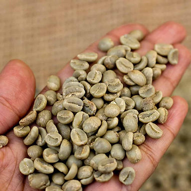 Green Robusta Coffee Beans.jpg