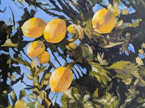 'Spring of Lemons' $220