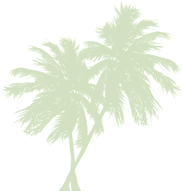 palm-tree-png_edited_edited_edited_edite
