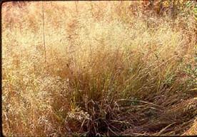 dry_grass.jpg
