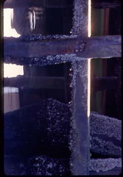 dock_barnacles.jpg