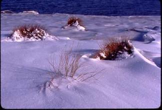 snow_grass.jpg