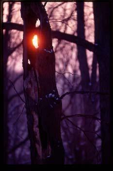 Tree_sun.jpg