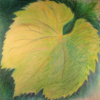 Chardonnay Leaf By Gina Rizzo