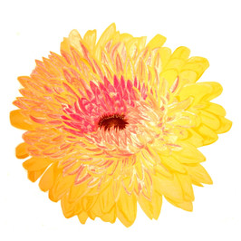 Double Yellow Gerbera By Gina Rizzo