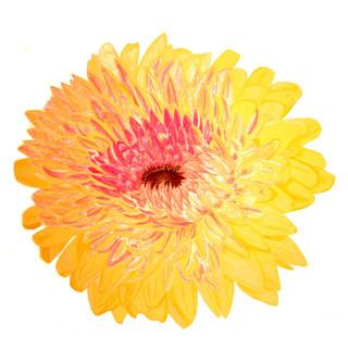 Double Yellow Gerbera By Gina Rizzo
