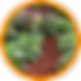 v2-Flowerbed Icon.png