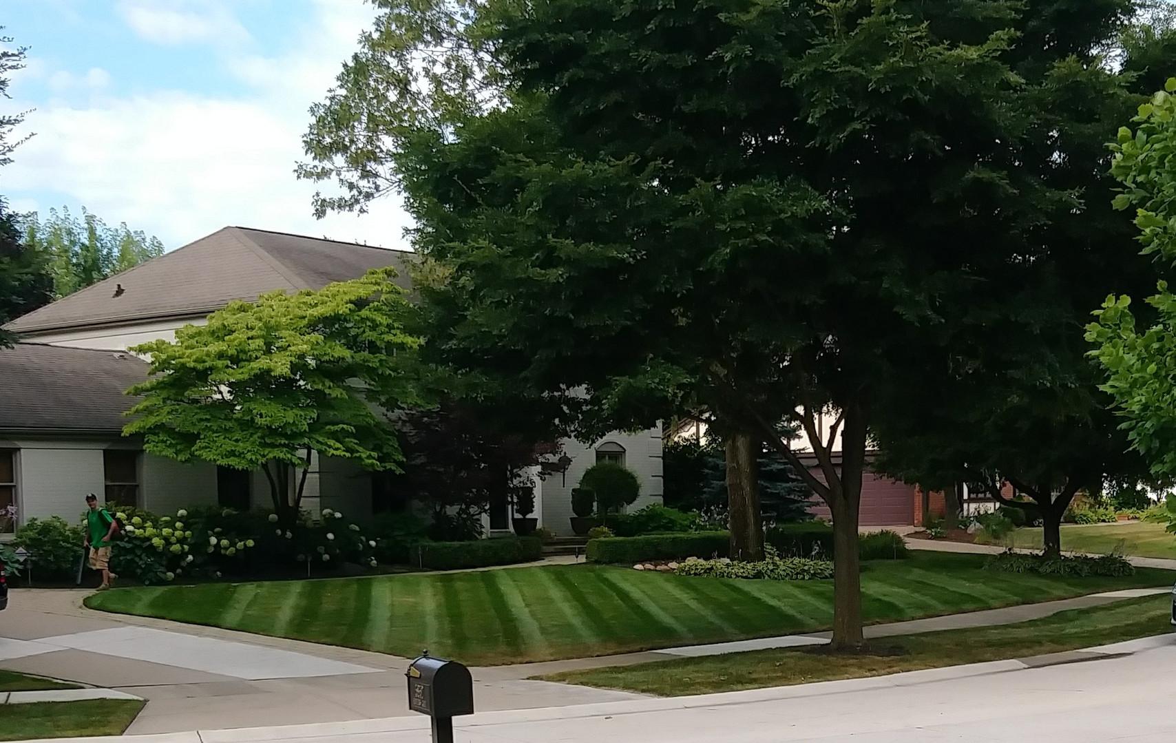 lawn C.jpg