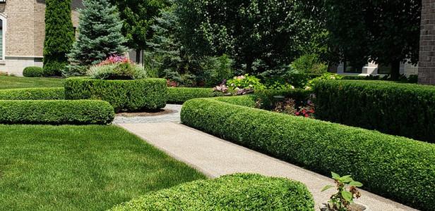 shrubs d .jpeg