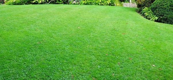 Fertilization-Greenline-Lawn-2.jpg