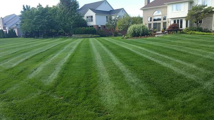 lawn B.jpg