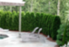 shrub-installation-mi-300x225.jpg