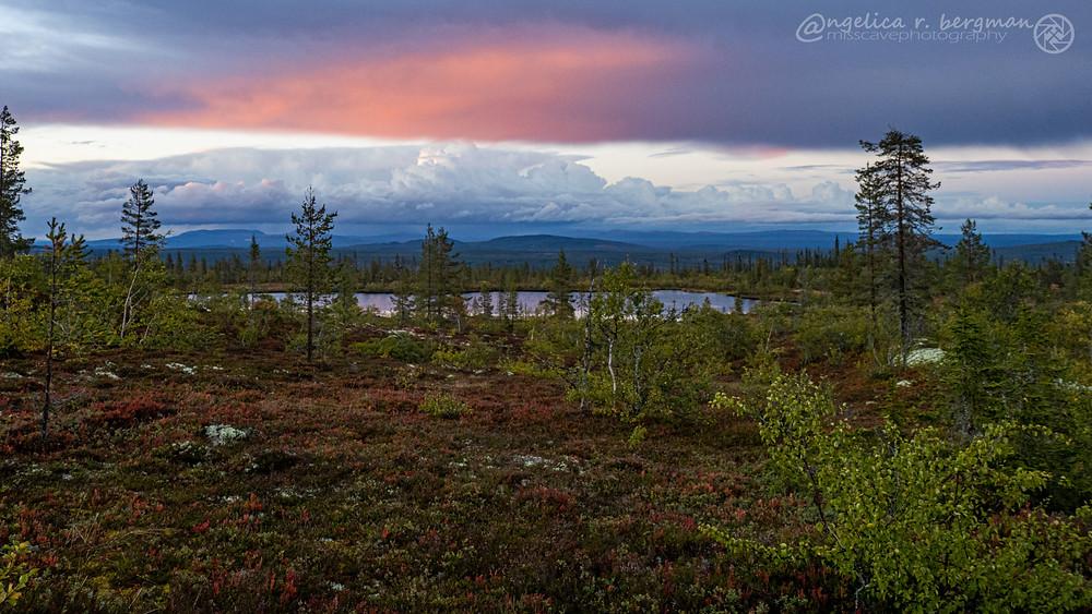 fjällskog med höga fjäll i bakgrunden