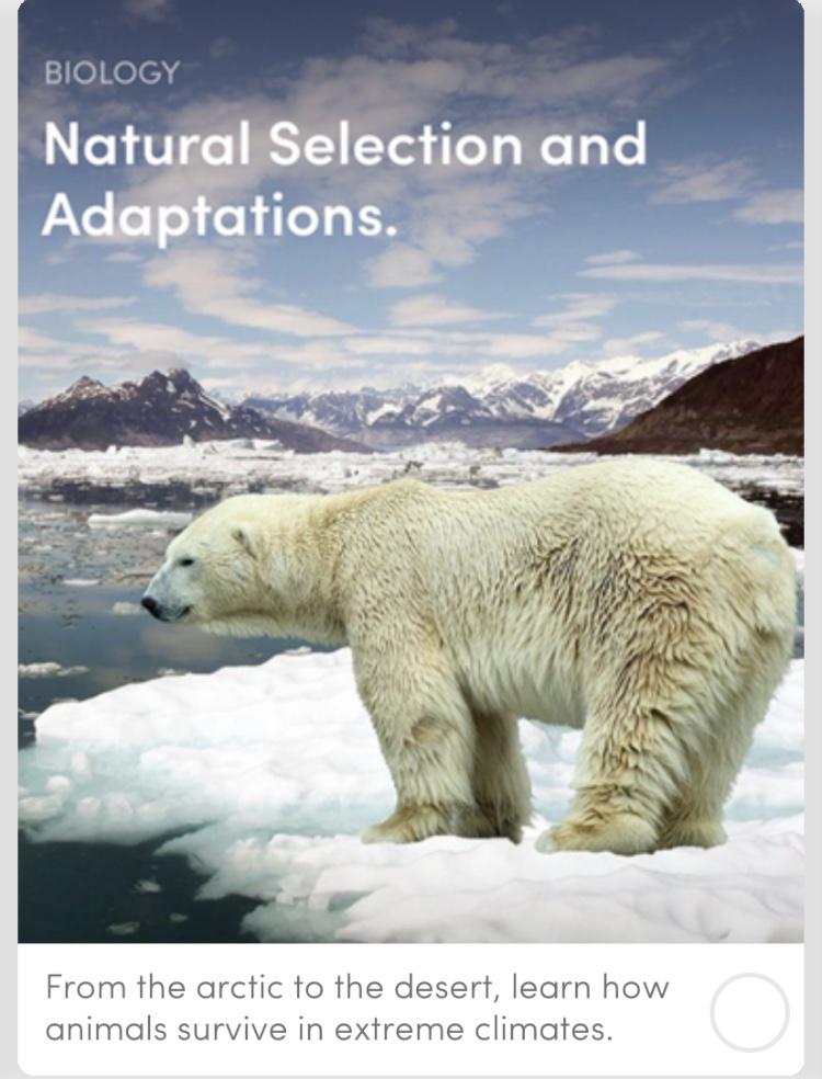 Natural Selection and Adaptations