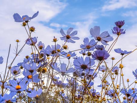 April 2021 - Spring has sprung!