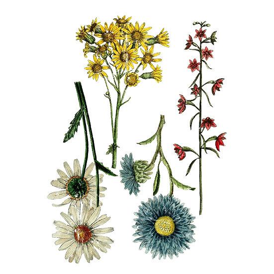IOD Iron Orchid Designs Transfer Wildflower Botanicals