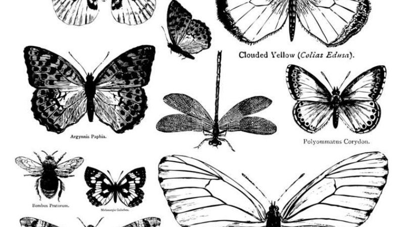 IOD Iron Orchid Designs Stamp Butterflies