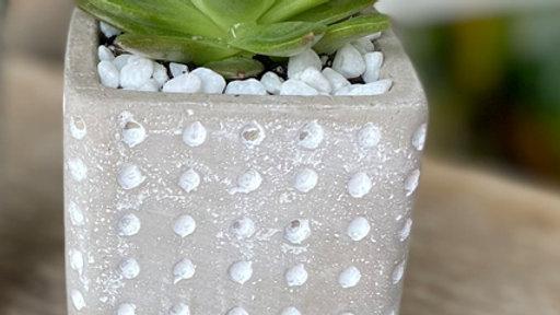 Polka Dot Pot with Succulent