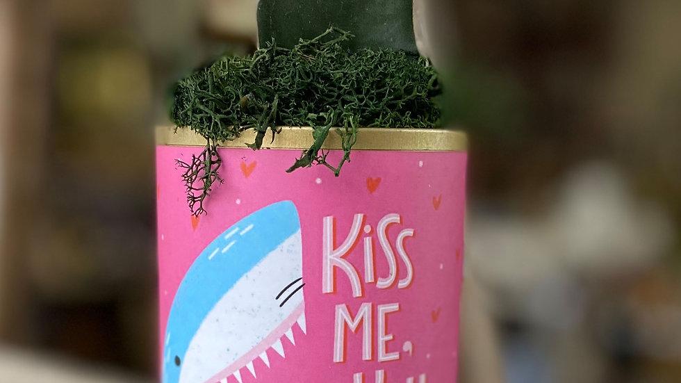 "Moon Cactus ""Kiss Me You Fool"""